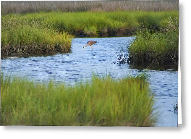 St. George Island Greeting Cards - Heron in a Salt Marsh Greeting Card by Bill Cannon