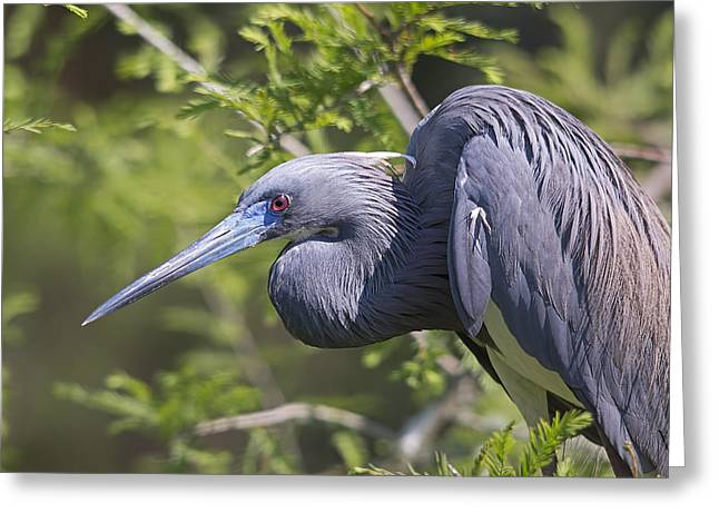 Heron In Blue Greeting Card by Kenneth Albin