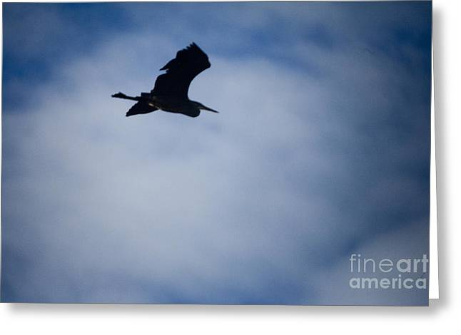 Heron in flight Greeting Card by Graham Foulkes