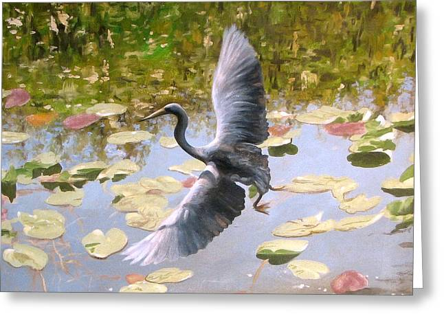 Grey Heron Greeting Cards - Heron in Flight Greeting Card by Tim Davis