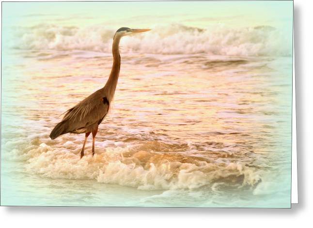 Featured Art Greeting Cards - Heron in Frothy Water Greeting Card by Toni Abdnour