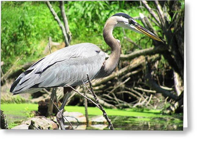 Arielle Cunnea Greeting Cards - Heron Greeting Card by LJAS Cunnea