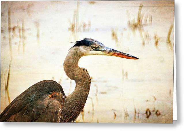 Heron Greeting Card by Marty Koch