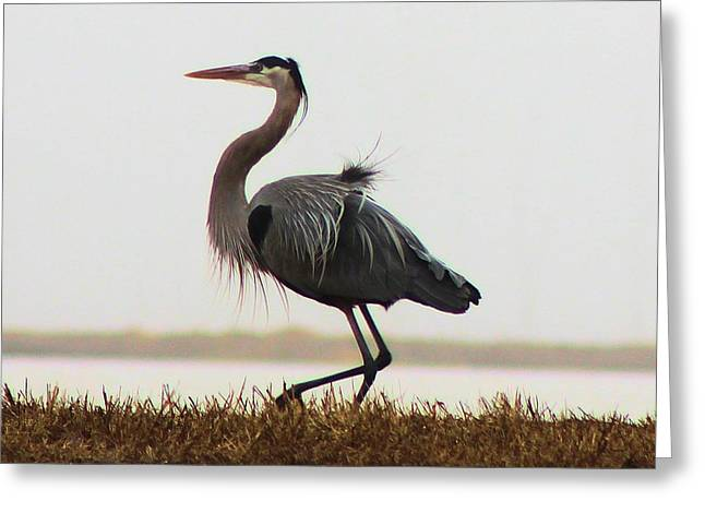 Plies Greeting Cards - Heron Morning Dance Greeting Card by Jane Lassiter  Boahn