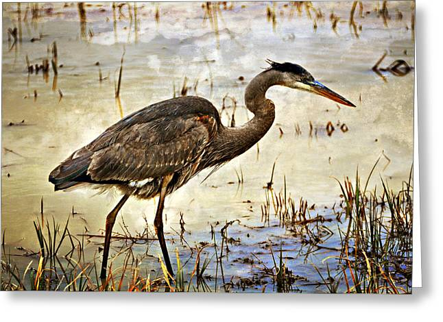 Marty Koch Greeting Cards - Heron on a Cloudy Day Greeting Card by Marty Koch