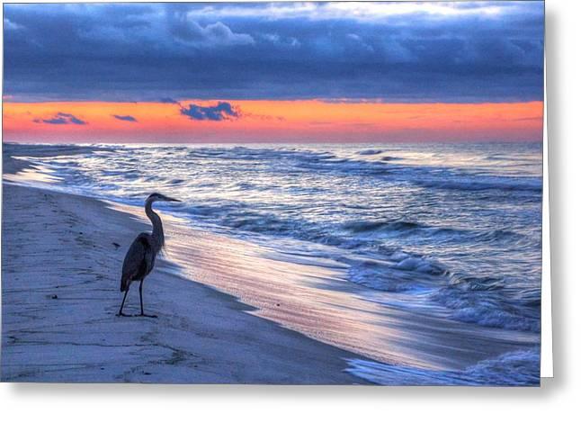 Michael Thomas Greeting Cards - Heron on Mobile Beach Greeting Card by Michael Thomas