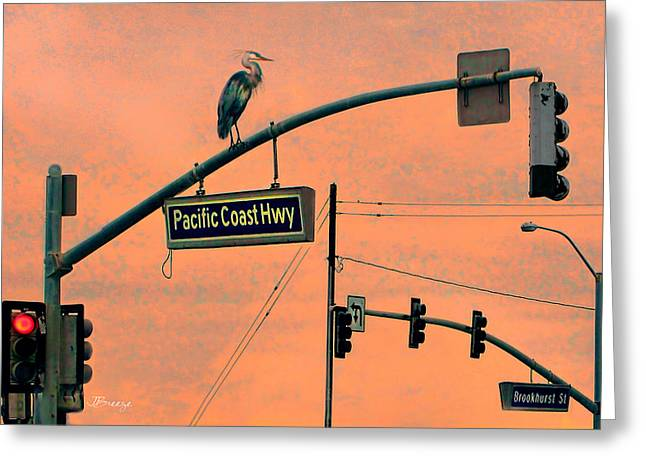Pch Greeting Cards - Heron on PCH Greeting Card by Jennie Breeze
