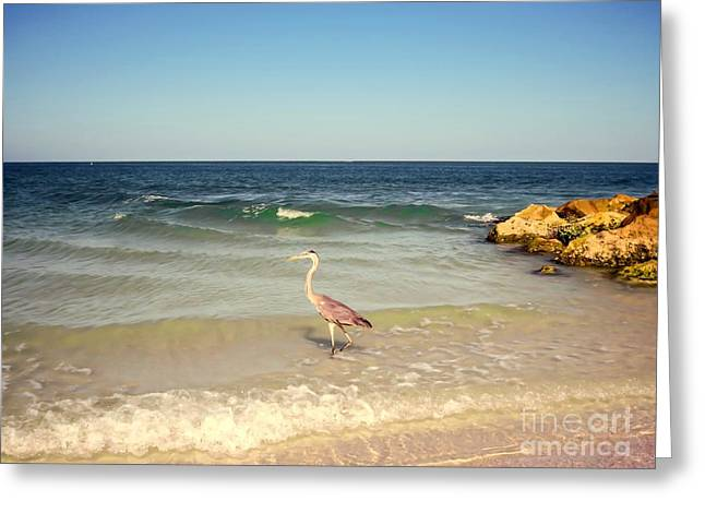 Egret Greeting Cards - Heron on the beach Greeting Card by Zina Stromberg