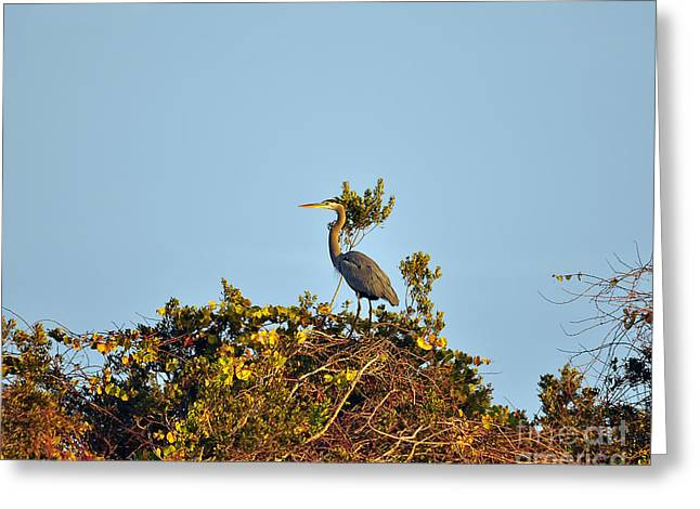 Pelicaniformes Greeting Cards - Heron Perch Greeting Card by Al Powell Photography USA
