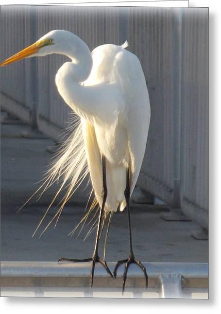 Cedar Key Greeting Cards - Heron Sitten on Dock 1 Greeting Card by Sheri McLeroy