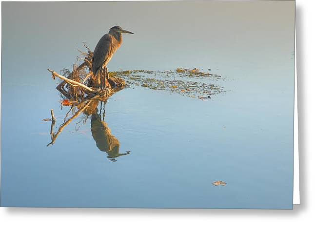 Great Blue Heron Framed Print Greeting Cards - Heron Waiting Greeting Card by Steven Ainsworth