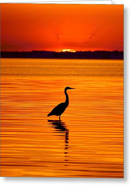 Recently Sold -  - Ocean. Reflection Greeting Cards - Heron with Burnt Sienna Sunset Greeting Card by William Bartholomew