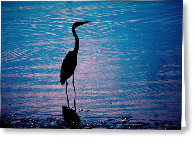 Herons Moment Greeting Card by Karol Livote