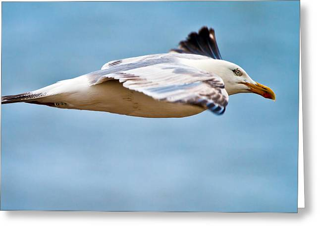 Canon 7d Greeting Cards - Herring Gull In Flight Greeting Card by Mr Bennett Kent
