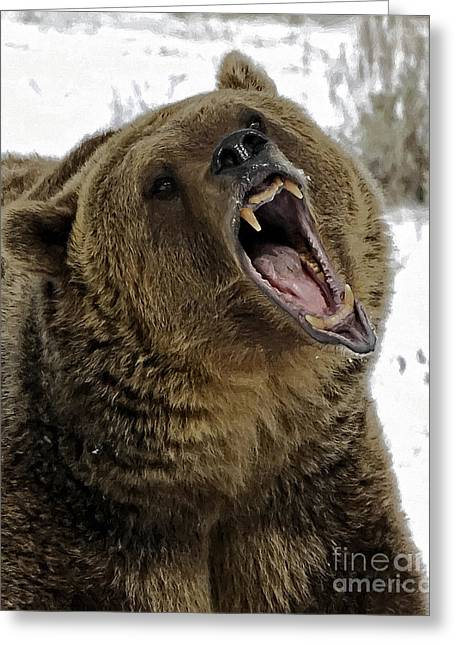 Growling Greeting Cards - Hey Bear Greeting Card by Wildlife Fine Art