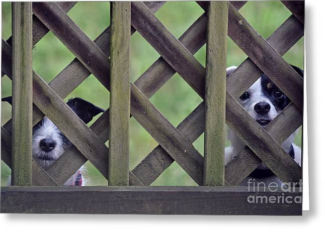Between The Two Greeting Cards - Hey... I Cant See Greeting Card by David G Nichols