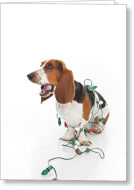 Basset Hound Greeting Cards Greeting Cards - Hey I Need Help Here Greeting Card by Jan Tyler