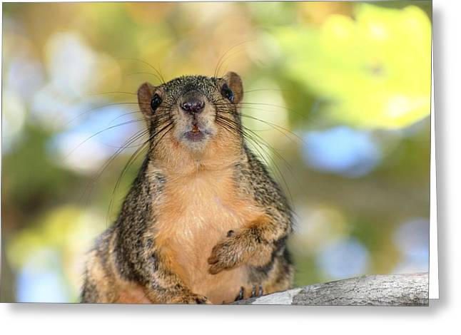 Fox Squirrel Greeting Cards - Hey Its Me Greeting Card by Ester  Rogers