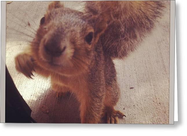 Kristin Smith Greeting Cards - Hey squirrel  Greeting Card by Kristin Smith