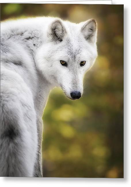 Beautiful Face Wolf Greeting Cards - Hey you Greeting Card by Eduard Moldoveanu
