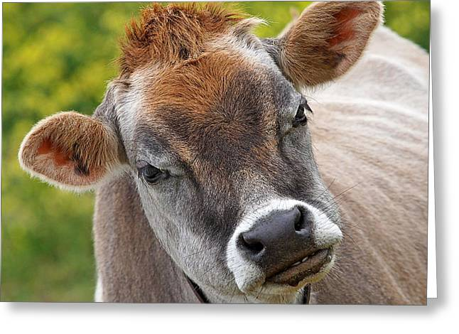Dairy Farmers And Farming Greeting Cards - Hey - You Think Im Funny - Cow Greeting Card by Gill Billington