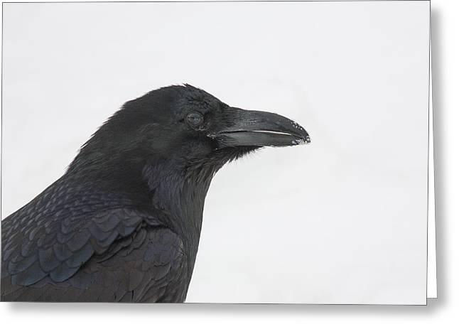 Magpies. Snow Greeting Cards - Hi Key Raven Greeting Card by Tim Grams