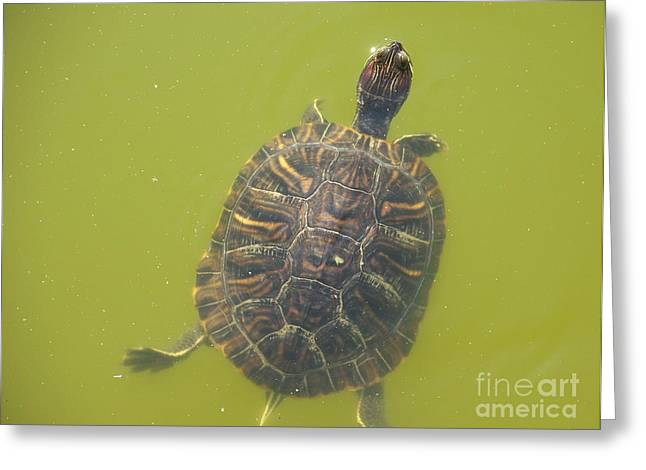 Kevin Croitz Greeting Cards - Hi There Turtle Greeting Card by Kevin Croitz