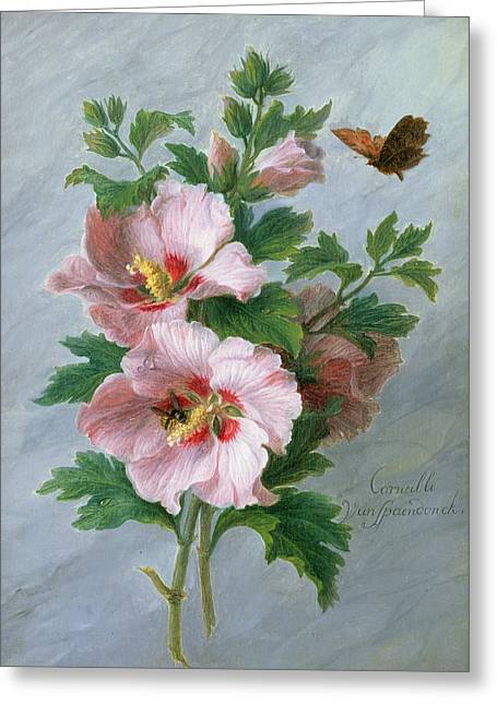 Flower Still Life Greeting Cards - Hibiscus Against A Marble Ledge Oil On Panel Greeting Card by Cornelis van Spaendonck
