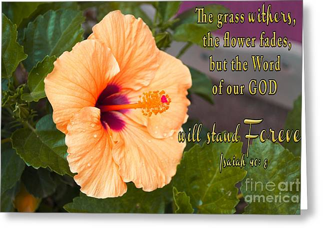 Floral Photographs Mixed Media Greeting Cards - Hibiscus and The Word of God Greeting Card by Beverly Guilliams