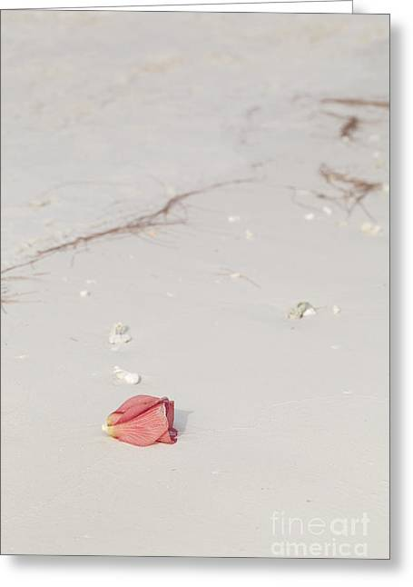 Tranquil Scene Escapism Greeting Cards - Hibiscus blossom on a tropical beach Greeting Card by Roberto Morgenthaler