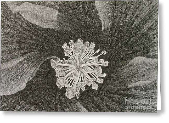 Stigma Drawings Greeting Cards - Hibiscus  Greeting Card by Chad Keith