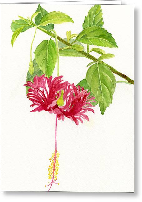 Feathery Greeting Cards - Hibiscus Chinese Red Lantern Greeting Card by Sharon Freeman