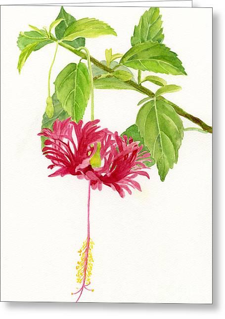 Hibiscus Greeting Cards - Hibiscus Chinese Red Lantern Greeting Card by Sharon Freeman