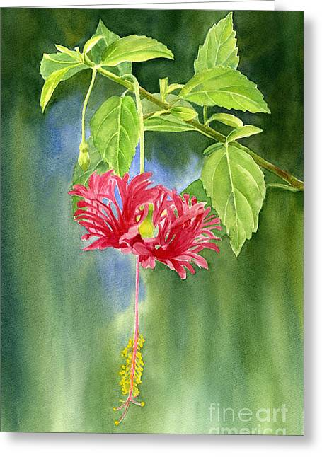 Flower Blossom Greeting Cards - Hibiscus Chinese Red Lantern with Background Greeting Card by Sharon Freeman