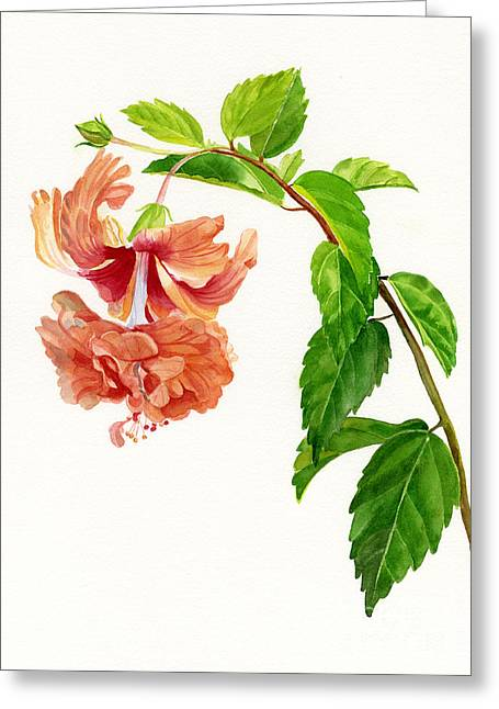 Hibiscus Greeting Cards - Hibiscus El Capitolio Sport Greeting Card by Sharon Freeman