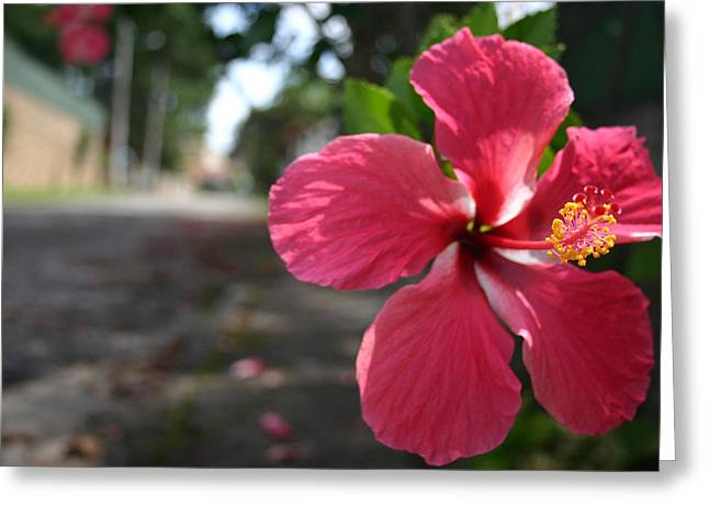 Frederico Borges Greeting Cards - Hibiscus Greeting Card by Frederico Borges