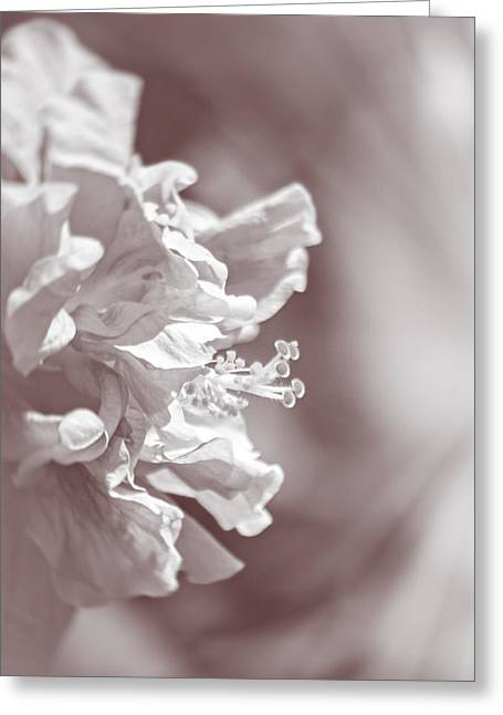 Florida Flowers Greeting Cards - Hibiscus In Sunlight Greeting Card by Carolyn Marshall