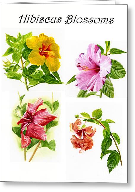 Hibiscus Greeting Cards - Hibiscus Poster with Script Greeting Card by Sharon Freeman