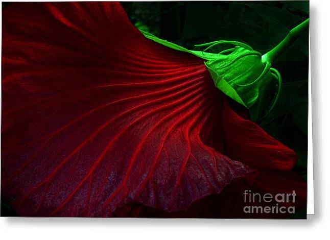Mike Nellums Greeting Cards - Hibiscus Red Greeting Card by Mike Nellums
