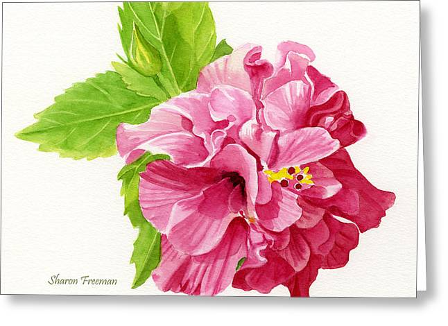 Hibiscus Greeting Cards - Hibiscus Rosa-Sinensis Greeting Card by Sharon Freeman