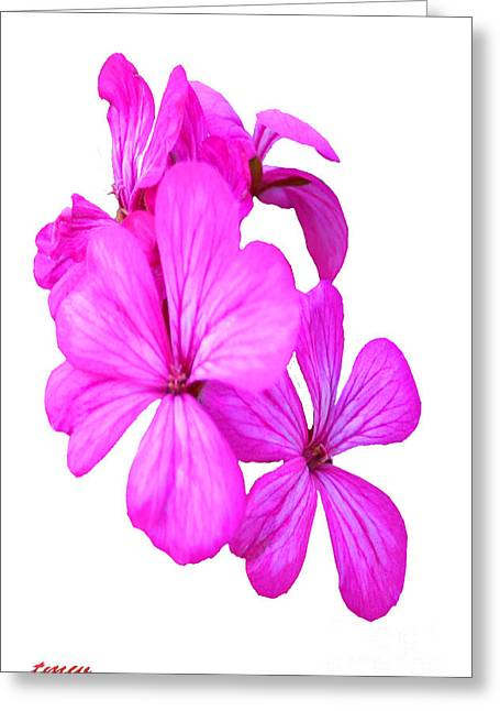 Installation Art Greeting Cards - Hibiscus Set One Greeting Card by Tina M Wenger