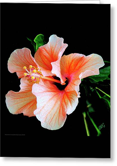 Best Sellers -  - Floral Digital Art Greeting Cards - Hibiscus Spectacular Greeting Card by Ben and Raisa Gertsberg