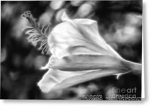 Surprise Greeting Cards - Hibiscus Unfolding BW Greeting Card by  rdm-Margaux Dreamations