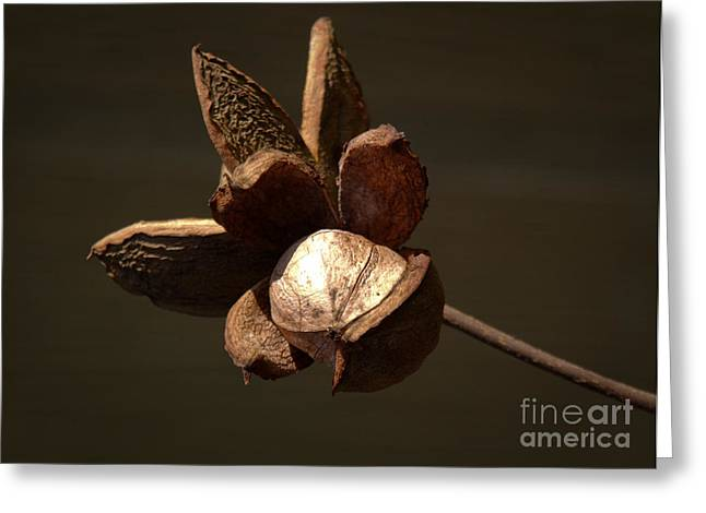 Nut Trees Greeting Cards - Hickory Tree Nut Greeting Card by Susan Leavines