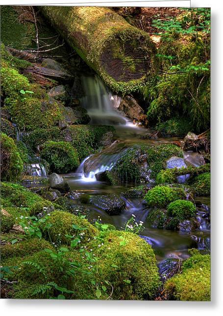 Babbling Greeting Cards - Hidden Brook Greeting Card by John Absher