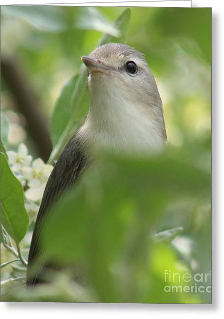 Ornithology Greeting Cards - Hidden Gem Greeting Card by Anita Oakley
