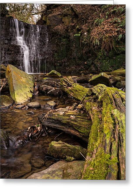 Britain Greeting Cards - Hidden In The Forest. Greeting Card by Daniel Kay