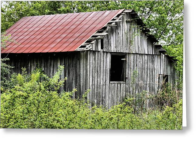 Tin Roof Greeting Cards - Hidden Greeting Card by JC Findley