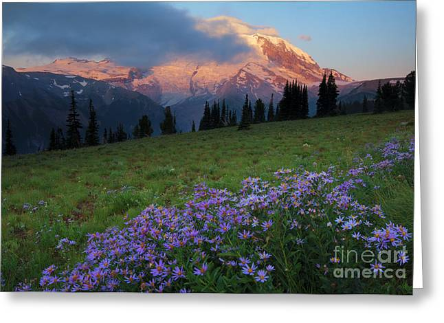 Aster Greeting Cards - Hidden Majesty Greeting Card by Mike  Dawson
