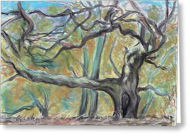 Print On Acrylic Drawings Greeting Cards - Hidden Oak and Canyon in Briones Park Greeting Card by Asha Carolyn Young
